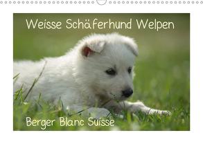 Weisse Schäferhund Welpen – Berger Blanc Suisse (Wandkalender 2020 DIN A3 quer) von Riedel,  Tanja
