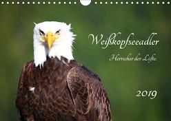 Weißkopfseeadler. Herrscher der Lüfte. 2019 (Wandkalender 2019 DIN A4 quer) von Anders,  Holm