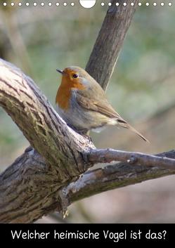 Welcher heimischer Vogel ist das? (Posterbuch DIN A4 hoch) von Kattobello,  k.A.