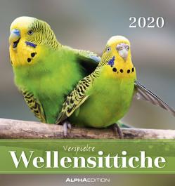 Wellensittiche 2020 – Postkartenkalender (16 x 17) – Budgerigars – zum aufstellen oder aufhängen – Geschenkidee – Tierkalender – Gadget von ALPHA EDITION