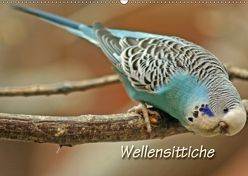 Wellensittiche (Wandkalender 2018 DIN A2 quer) von Mielewczyk,  Barbara