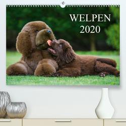 Welpen 2020 (Premium, hochwertiger DIN A2 Wandkalender 2020, Kunstdruck in Hochglanz) von Starick,  Sigrid