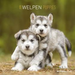 Welpen 2020 – Puppies – Wandkalender – Broschürenkalender (30 x 60 geöffnet) – Tierkalender – Wandplaner von ALPHA EDITION