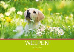 Welpen im Frühling (Wandkalender 2019 DIN A3 quer) von Dzierzawa,  Judith