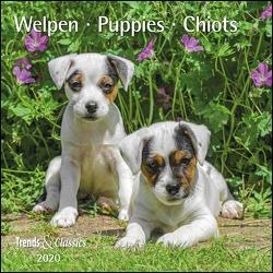 Welpen Puppies 2020 – Broschürenkalender – Wandkalender – mit herausnehmbarem Poster – Format 30 x 30 cm von DUMONT Kalenderverlag