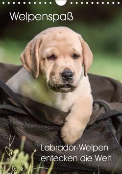 Welpenspaß – Labrador Welpen entdecken die Welt (Wandkalender 2019 DIN A4 hoch) von Pelzer (Pelzer-Photography),  Claudia