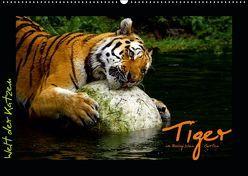 Welt der Katzen – Tiger (Wandkalender 2019 DIN A2 quer) von Skupin,  Marcus