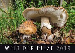 Welt der Pilze 2019 von Quelle & Meyer Verlag