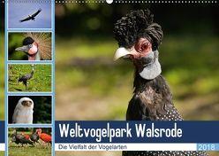 Weltvogelpark Walsrode – Die Vielfalt der Vogelarten (Wandkalender 2018 DIN A2 quer) von Gayde Quelle: Weltvogelpark Walsrode,  Frank