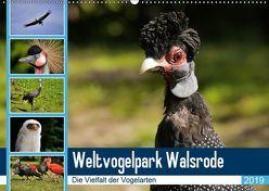 Weltvogelpark Walsrode – Die Vielfalt der Vogelarten (Wandkalender 2019 DIN A2 quer) von Gayde Quelle: Weltvogelpark Walsrode,  Frank