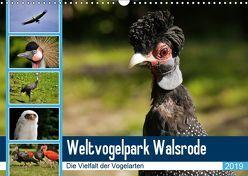 Weltvogelpark Walsrode – Die Vielfalt der Vogelarten (Wandkalender 2019 DIN A3 quer) von Gayde Quelle: Weltvogelpark Walsrode,  Frank