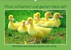 Wer gackert und schnattert denn da? Mit Enten und Hühnern durchs Jahr (Wandkalender 2019 DIN A2 quer) von Löwer,  Sabine