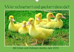 Wer gackert und schnattert denn da? Mit Enten und Hühnern durchs Jahr (Wandkalender 2019 DIN A3 quer) von Löwer,  Sabine
