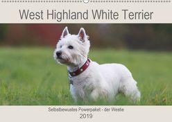 West Highland White Terrier – Selbstbewustes Powerpaket – der Westie (Wandkalender 2019 DIN A2 quer) von Mielewczyk,  Barbara