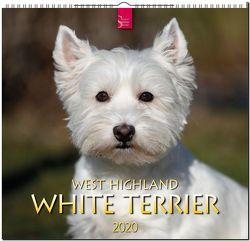 West Highland White Terrier von Redaktion Verlagshaus Würzburg,  Bildagentur