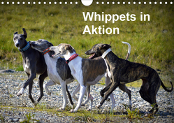 Whippets in AktionAT-Version (Wandkalender 2021 DIN A4 quer) von Redl,  Ula