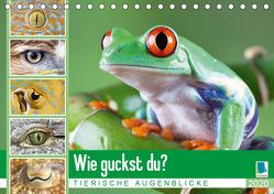 Wie guckst du? Tierische Augenblicke (Tischkalender 2020 DIN A5 quer) von CALVENDO