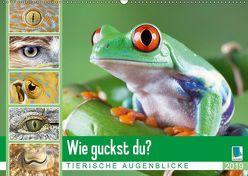 Wie guckst du? Tierische Augenblicke (Wandkalender 2019 DIN A2 quer) von CALVENDO