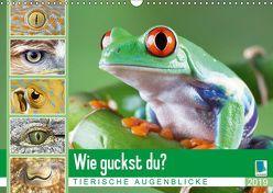 Wie guckst du? Tierische Augenblicke (Wandkalender 2019 DIN A3 quer) von CALVENDO