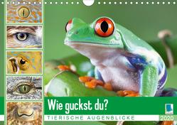 Wie guckst du? Tierische Augenblicke (Wandkalender 2020 DIN A4 quer) von CALVENDO