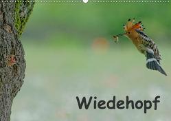 Wiedehopf (Wandkalender 2021 DIN A2 quer) von Wolf,  Gerald
