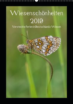 Wiesenschönheiten (Wandkalender 2019 DIN A2 hoch) von Birzer,  Christian