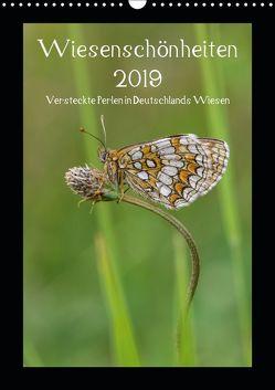 Wiesenschönheiten (Wandkalender 2019 DIN A3 hoch) von Birzer,  Christian