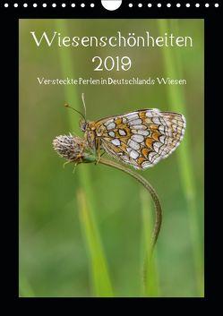 Wiesenschönheiten (Wandkalender 2019 DIN A4 hoch) von Birzer,  Christian