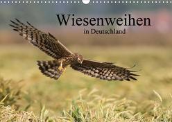 Wiesenweihen in Deutschland (Wandkalender 2020 DIN A3 quer) von Wenner,  Martin