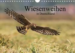 Wiesenweihen in Deutschland (Wandkalender 2020 DIN A4 quer) von Wenner,  Martin