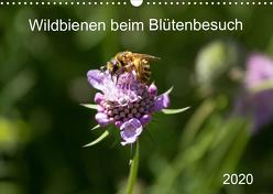 Wildbienen beim Blütenbesuch (Wandkalender 2020 DIN A3 quer) von Fröhlich,  Franziska