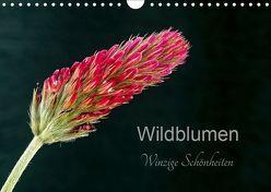 Wildblumen – winzige Schönheiten (Wandkalender 2019 DIN A4 quer) von Spies,  Harald