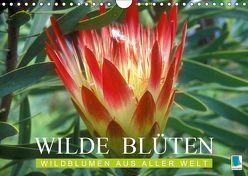 Wilde Blüten: Wildblumen aus aller Welt (Wandkalender 2019 DIN A4 quer) von CALVENDO