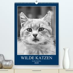 Wilde Katzen – Korsikas Samtpfoten (Premium, hochwertiger DIN A2 Wandkalender 2020, Kunstdruck in Hochglanz) von Schimmack,  Claudia
