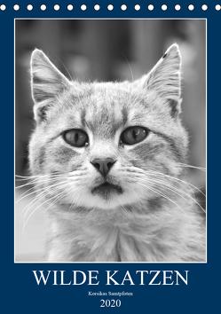 Wilde Katzen – Korsikas Samtpfoten (Tischkalender 2020 DIN A5 hoch) von Schimmack,  Claudia