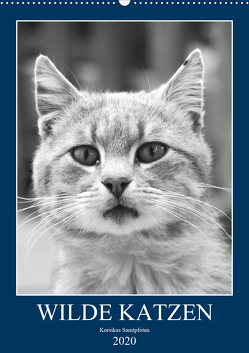 Wilde Katzen – Korsikas Samtpfoten (Wandkalender 2020 DIN A2 hoch) von Schimmack,  Claudia