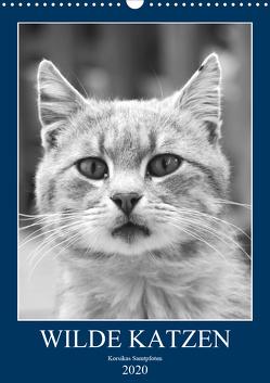 Wilde Katzen – Korsikas Samtpfoten (Wandkalender 2020 DIN A3 hoch) von Schimmack,  Claudia