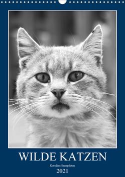 Wilde Katzen – Korsikas Samtpfoten (Wandkalender 2021 DIN A3 hoch) von Schimmack,  Claudia