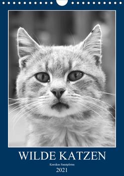 Wilde Katzen – Korsikas Samtpfoten (Wandkalender 2021 DIN A4 hoch) von Schimmack,  Claudia