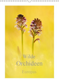 Wilde Orchideen Europas (Wandkalender 2019 DIN A3 hoch)