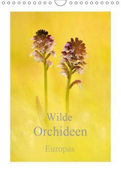 Wilde Orchideen Europas (Wandkalender 2019 DIN A4 hoch)