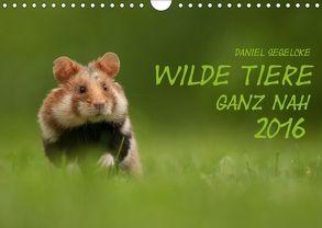Wilde Tiere – Ganz nah (Wandkalender 2018 DIN A4 quer) von Segelcke,  Daniel
