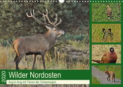 Wilder Nordosten – Aug in Aug mit Tieren der Ostseeregion (Wandkalender 2020 DIN A3 quer) von Schaack,  René