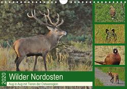 Wilder Nordosten – Aug in Aug mit Tieren der Ostseeregion (Wandkalender 2020 DIN A4 quer) von Schaack,  René