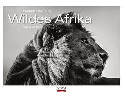 Wildes Afrika – Kalender 2019 von Baheux,  Laurent, Weingarten