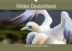 Wildes Deutschland – Unsere faszinierende Tierwelt (Wandkalender 2018 DIN A3 quer) von Webeler,  Janita