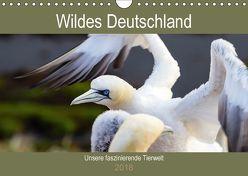 Wildes Deutschland – Unsere faszinierende Tierwelt (Wandkalender 2018 DIN A4 quer) von Webeler,  Janita