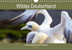 Wildes Deutschland – Unsere faszinierende Tierwelt (Wandkalender 2021 DIN A4 quer) von Webeler,  Janita
