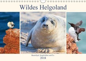Wildes Helgoland – Basstölpel, Kegelrobbe und Co. 2018 (Wandkalender 2018 DIN A4 quer) von Beyer (Moqui),  Daniela