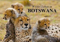 Wildes Leben in Botswana (Wandkalender 2019 DIN A2 quer) von Stanzer,  Elisabeth